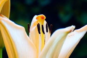 18mm Blume_1.jpg