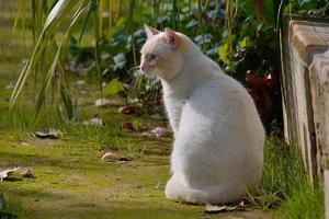 -Katze2-.jpg