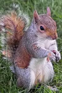 -Eichhörnchen-.jpg