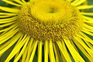 Blume-SD14 SDIM2063.jpg