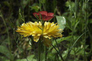 Blume-SD14 - SDIM1954.jpg