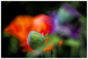 IMG02715-aquarell.jpg