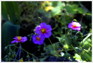 IMG02731-aquarell.jpg