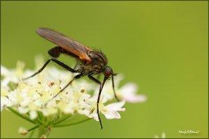 Insekt_I.jpg