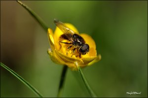 Insekt_II.jpg