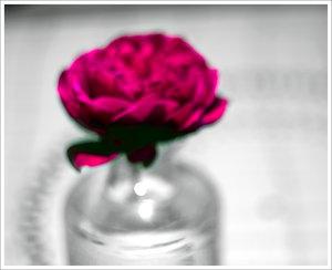 IMG02837colorkey1.jpg
