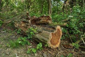 Holz-SD14 - SDIM6106.jpg