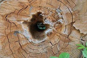 Holz-SD14 - SDIM6107.jpg