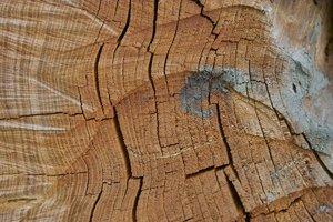 Holz-SD14 - SDIM6108.jpg