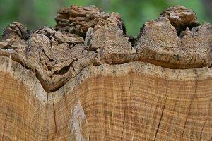 Holz-SD14 - SDIM6109.jpg