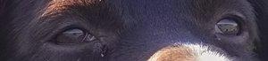 Socke in der Wiese IMG06729super Augenausschnitt (c) PPf.jpg