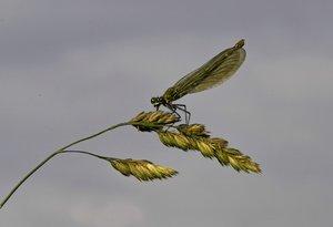 Libelle-SD10 - IMG07226_1.jpg