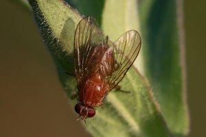 biotop-DSC00844.jpg