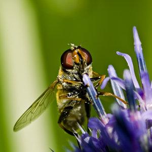 Fliege (1 von 4).jpg