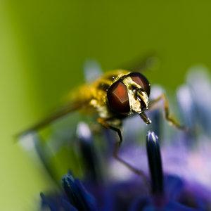 Fliege (2 von 4).jpg