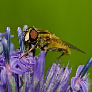 Fliege (3 von 4).jpg