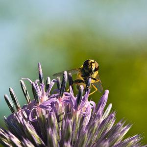 Fliege (4 von 4).jpg