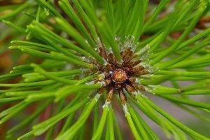 Alpengarten-SD10 - IMG07413.jpg
