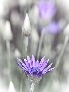 violett little flower1030282.jpg