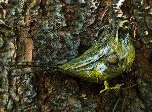 Vogel (1 von 1).jpg