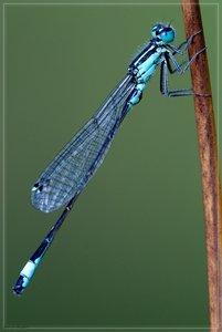 libelle-DSC01658.jpg