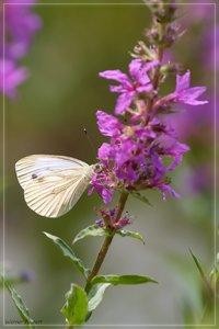 nektar-DSC01753.jpg
