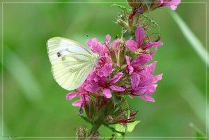nektar-DSC01762.jpg