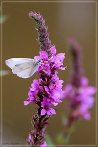 nektar-DSC01781.jpg