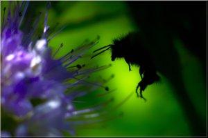 Nightflyer_mini.jpg