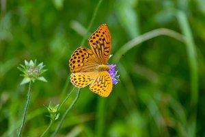 Butterfly-SD10 - IMG08858.jpg