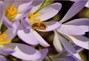 Erste Biene_3_klein.jpg