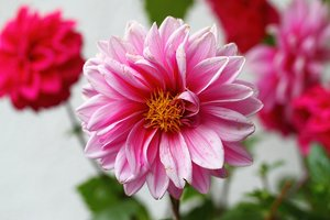 Blume-001 klein.jpg
