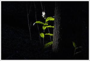 4-IMG03025-crop.jpg