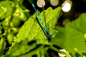 Libelle-original-klein.jpg