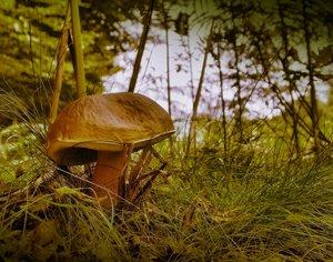 Ein Pilz ohne lila bitte SDIM8545h8 vin3 psc_1 nicht so lila(c) PPf.jpg