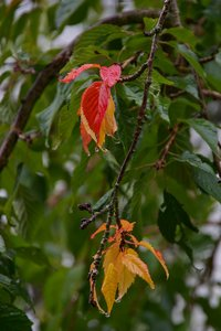 Herbst-SDIM6796_1.jpg
