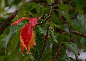 Herbst-SDIM6797_1.jpg