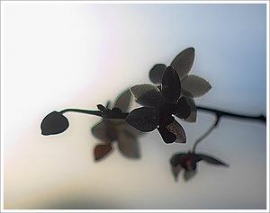 IMG03086-crop2.jpg