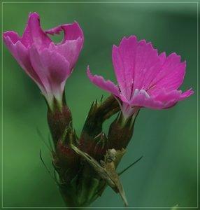 Flowers-SD10 - IMG07341_1.jpg