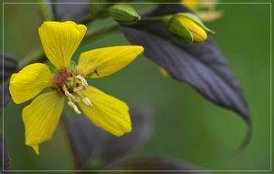 Flowers-SD10 - IMG07387_1.jpg