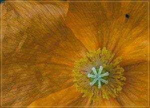 Flowers-SD10 - IMG07398_1.jpg