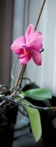 comp_orchidea pink vágva3.jpg