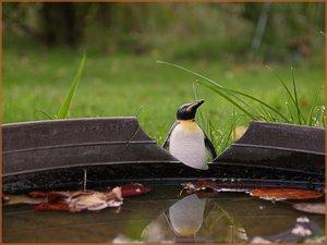 pinguin4.jpg