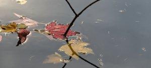 Stadtpark RE Blätter und Zweige.jpg