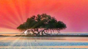 Mangropven 1300.jpg