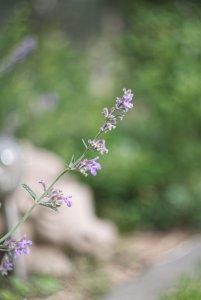 Gartenblumen 02 bf.jpg