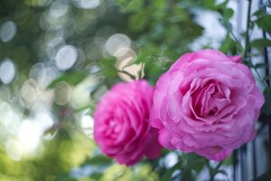 bf Gartenblume 03.jpg