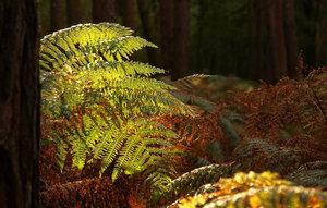 Wald 001 A3.jpg