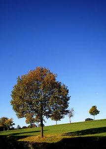 Bäume 021 A3.jpg