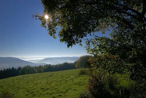 Wald 005 A3.jpg